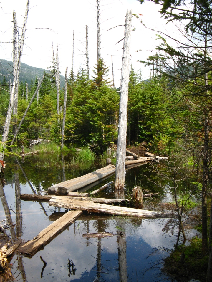 The trail up to Lake Arnold consisted of floating logs -- some of which would sink when stepped on
